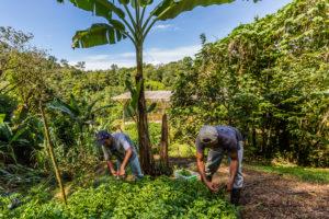 gardeners at Finca Bellavista nursery